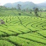 6 Tempat Wisata Bandung Yang Dapat Anda Kunjungi Saat Liburan