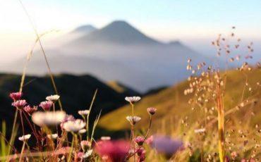 Bunga – Bunga Cantik yang Tumbuh di Ketinggian, Ada yang Boleh Dipetik dan Ada Juga yang Tak Boleh Dipetik