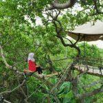 Rumah Pohon Goa Cocor, Destinasi Wisata Alam Baru di Kebumen yang Bikin Betah Nongkrong Berlama- Lama