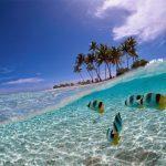 Surga Bawah Laut Pulau Harapan yang Sangat Mempesona