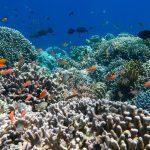 Berkunjung ke Pulau Tunda yang Keindahannya Wajib Untuk Dieksplorasi