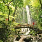 Selain Pantai, Berikut Destinasi Wisata Alam di Gunungkidul yang Wajib Dieksplore Keindahan Alamnya