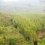 Obyek Wisata Alam di Bandung yang Sering Dikunjungi Wisatawan Ketika Hari Libur Tiba