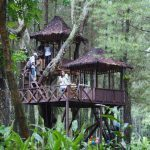 Keindahan Alam dan Kesejukan Omah Kayu Hutan Pinus Songgon